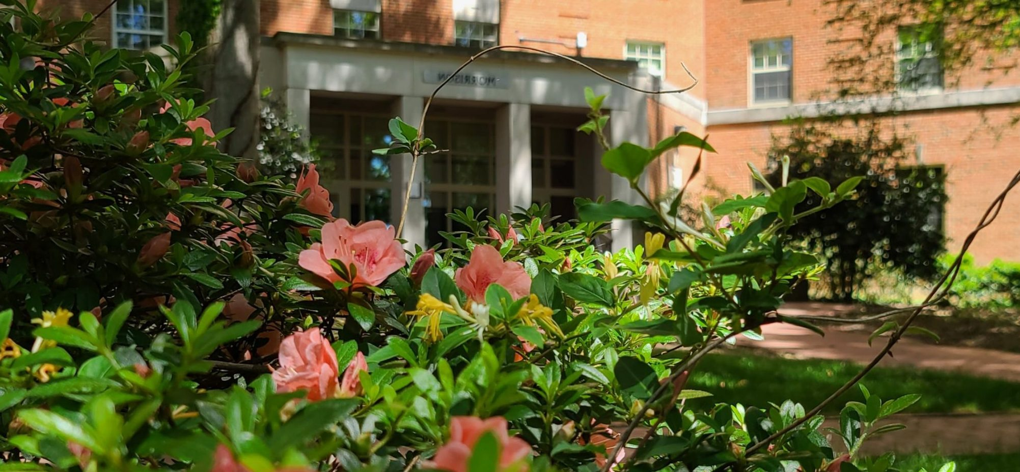 Pink flowers in front of Morrison Residence Hall